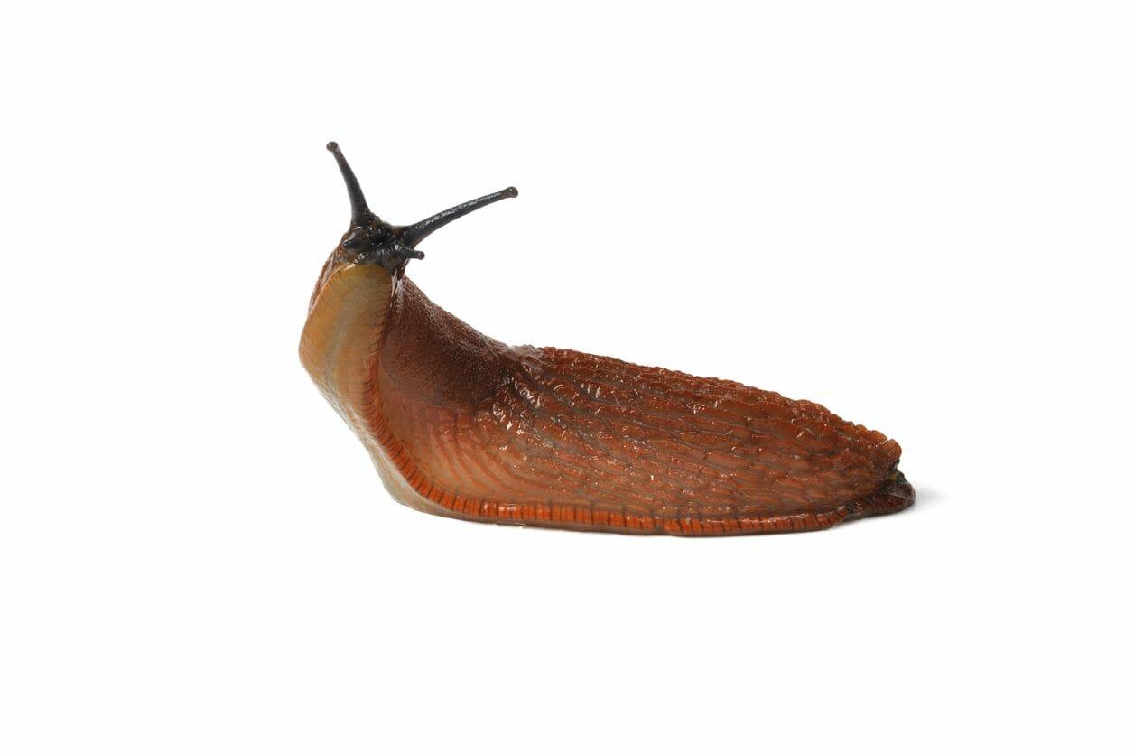 slugbot