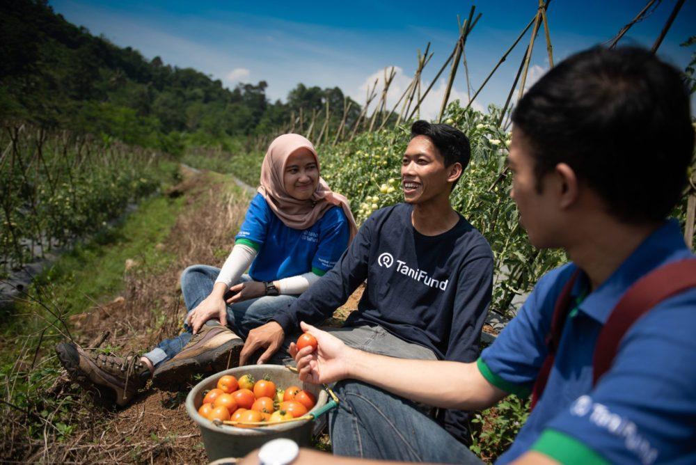 TaniHub employees chatting at a tomato farm